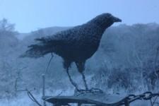 16 Wire Raven